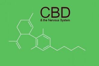 How-CBD-Benefits-the-Human-Nervous-System