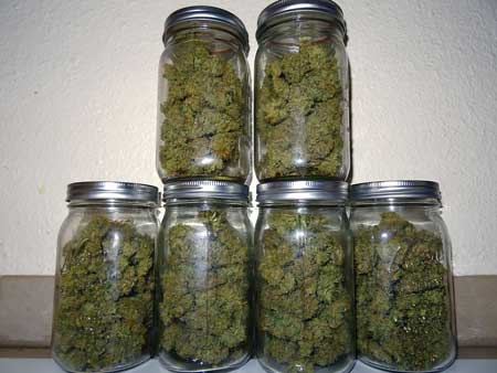 Put your newly dried cannabis in glass jars for the curing process - this will make a big difference in how your buds smell, as well as their potency