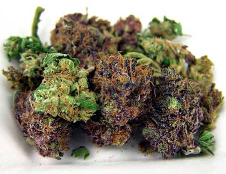 Picture of beautiful top-shelf cannabis buds in both green and purple. You can grow marijuana buds that are better than what you get at the dispensary! This bud quality tutorial will show you how!